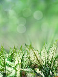 Green leaves on light bokeh background Royalty Free Stock Image