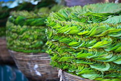Green leaves in local market in India. Stock Photos