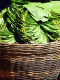 Green leaves in local market in India. Stock Images