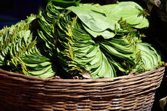 Green leaves in local market in India. Royalty Free Stock Image