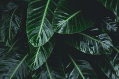 Green leaves Low key modern style toned background image.  royalty free stock photos