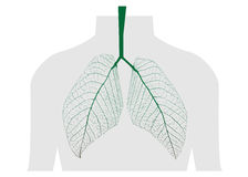 Green leaves of the lung Royalty Free Stock Images