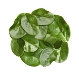 Green leaves macro Royalty Free Stock Images
