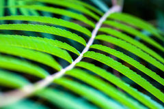 Green leaves. Macro photograph of green leaves of tree in  garden Stock Images