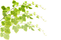 Green leaves make pattern background. Stock Photo