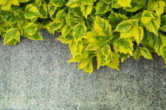 Green leaves on marble Stock Photography