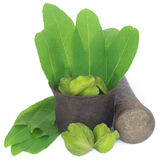 Green leaves of medicinal Terminalia arjuna with fruits. In a vintage mortar with pestle royalty free stock photos