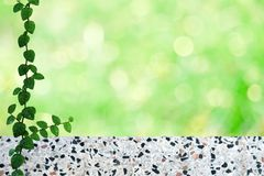 Green leaves of Mexican daisy nature border and blur green bokeh terrazzo floor. Green leaves of Coatbuttons or  Mexican daisy nature border and blur bokeh stock images