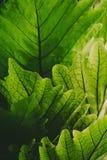 green leaves mot bakgrund field blåa oklarheter för grön vitt wispy natursky för gräs arkivbild