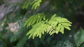 Green leaves moving in air, forest stcok footage stock video