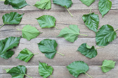 Green Leaves of Mulberry disrupted on brown wooden background. Green Leaves of Mulberry disrupted on brown wooden background for design concept of nature royalty free stock photos