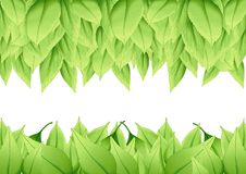 Green leaves natural paint and Fresh leaves float in the air vector illustration