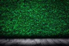 Green leaves natural wall with wood floor background. Green leaves natural wall with wood floor textured background Royalty Free Stock Image