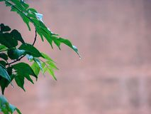 Green Leaves Nature Background Royalty Free Stock Photography