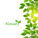 Green leaves nature background print Royalty Free Stock Photo