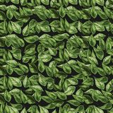 Green leaves on the nature background. Vector green foliage seamless pattern. vector illustration