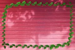 Green leaves of  nature border and shadow tree on red wood. Background ficus pumila tridax procumbens abstract aged architecture beauty build cement coatbuttons stock photo