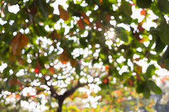 Green leaves nature on tree, image blur defocused Royalty Free Stock Images