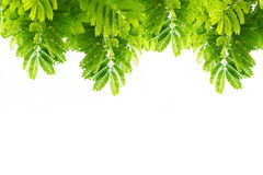 Green leaves nature on white isolate Royalty Free Stock Photography