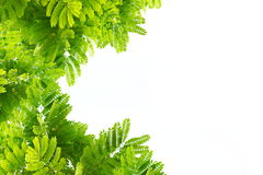 Green leaves nature on white isolate Royalty Free Stock Photo