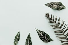 Green leaves. Neutral Minimalist Flat Lay Scene with tropical elements. Top view Stock Photos