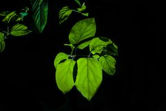 Green leaves at night royalty free stock images