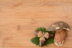 Green leaves, oak nuts and porcini Stock Photos