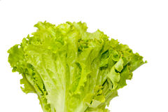 Green Leaves Of Salad Stock Photos