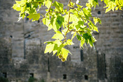 Green leaves, old castle in background. Green leaves with an old european castle in the background Stock Photos