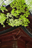 Green leaves and old temple, Kyoto Japan Stock Images