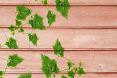 Green Leaves on  old wood  background. Royalty Free Stock Photography