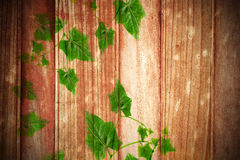 Green Leaves on  old wood  background. Royalty Free Stock Photos