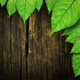 Green leaves on the old wooden Stock Photos
