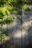 Green leaves on old wooden background Stock Photo