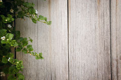 Green leaves on the old wooden background Royalty Free Stock Photo
