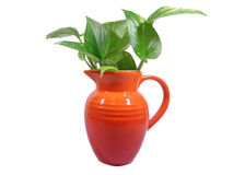Green leaves in one bright red jug isolated on white background Stock Images