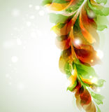 Green leaves. Green orange branch with abstract leaves Stock Image