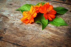 Green leaves and orange flower Stock Photos