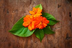 Green leaves and orange flower on wooden background Royalty Free Stock Photography