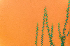 green leaves on orange wall textured for background Stock Photos