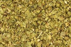 Green leaves oregano background Royalty Free Stock Photos