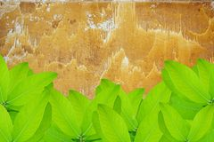 Green leaves over grunge metal wall Royalty Free Stock Image