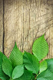 Green leaves over vintage wood Royalty Free Stock Photography