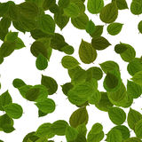 Green leaves over white background stock photo