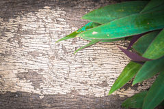 Green Leaves over Wood background Stock Images
