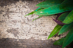 Green Leaves over Wood background Royalty Free Stock Photo