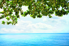 Green leaves from overhanging tree over blue ocean horizon Royalty Free Stock Images