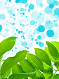 Green Leaves on Oxygen Background Royalty Free Stock Photo