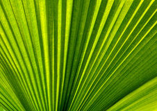 green leaves palm Stock Photo