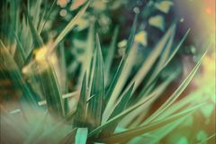 Green leaves of a palm tree abstract pattern background. Dark Green leaves of a palm tree abstract pattern background with light blurs and flares toned Stock Photo